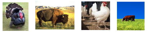 Organic Animals